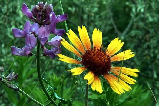 Mario Brenes Simon - Wild flowers