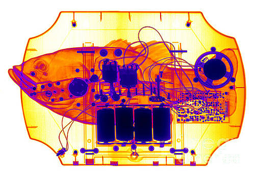 Ted Kinsman - X-ray Of Mechanical Fish