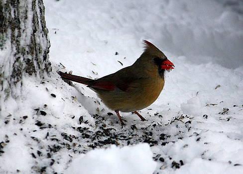 Anne Babineau - lady cardinal
