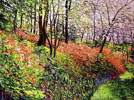 David Lloyd Glover - Magic Flower Forest