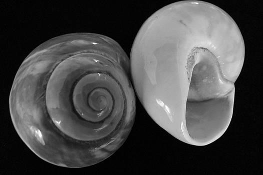 Mary Deal - Moon Shells