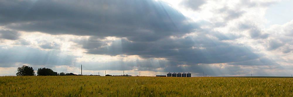 Stuart Turnbull - Alberta wheat field