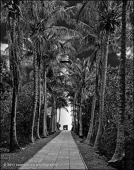 samdobrow  photography - Allee at Key Biscayne Lighthouse