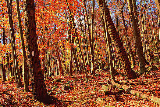 Raymond Salani III - Appalachian Trail South of Culver Gap