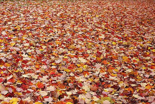 Marilyn Wilson - Autumn Leaves