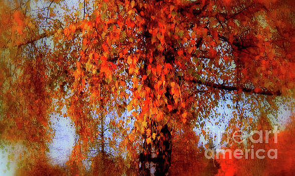 Susanne Van Hulst - Autumn Tree in Switzerland