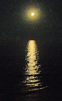 Patricia Taylor - Beach Moonglow