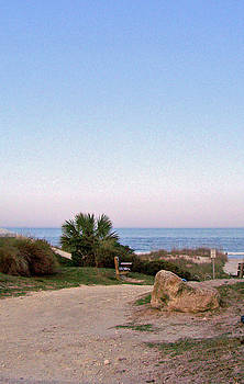 Patricia Taylor - Beach Walkway