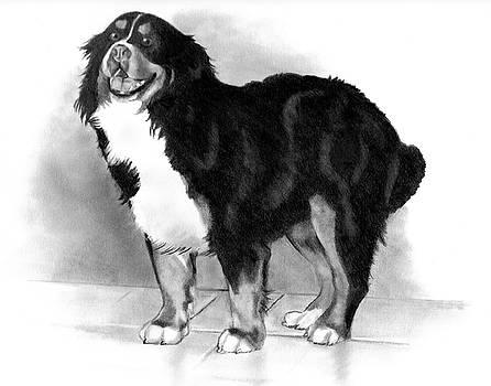 Joyce Geleynse - Bernese Mountain Dog