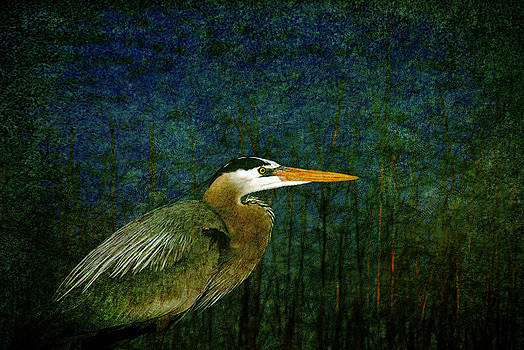Susanne Van Hulst - Big Heron Bird