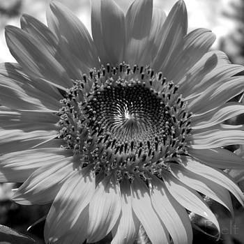 Christine Belt - Black and White Oh Summer Day