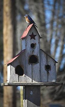 Teresa Mucha - Bluebird on Birdhouse