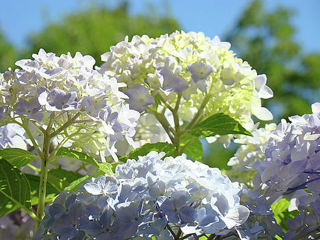 Baslee Troutman - Bright Floral art Pastel Blue Purple Hydrangeas Flowers Baslee Troutman
