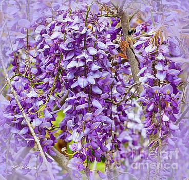 Michelle Wiarda - Busy Bee in Wisteria Flowers