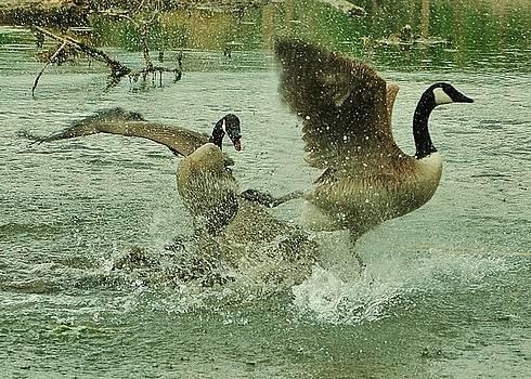 Joy Bradley - Canada Goose Ballet