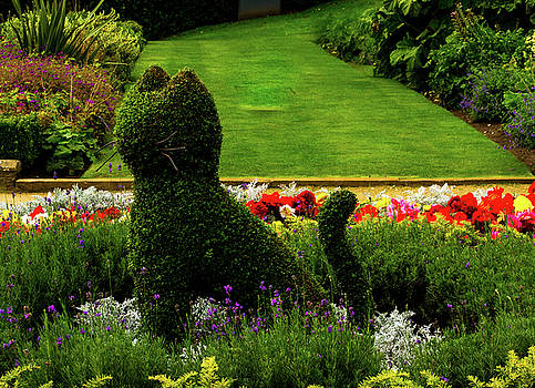 Mike Shaw - Cat Topiary Belfast