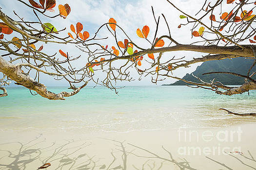 Charmian Vistaunet - Colorful Tree North Shore