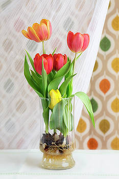 Susan Gary - Colorful Tulips and Bulbs in Glass Vase