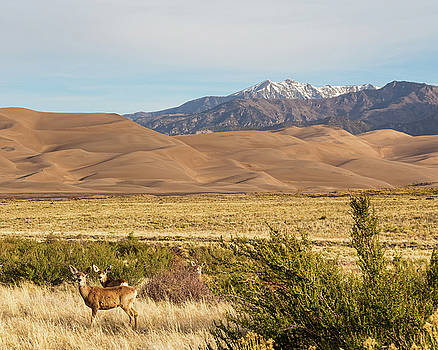 James BO Insogna - Deer And The Colorado Sand Dunes