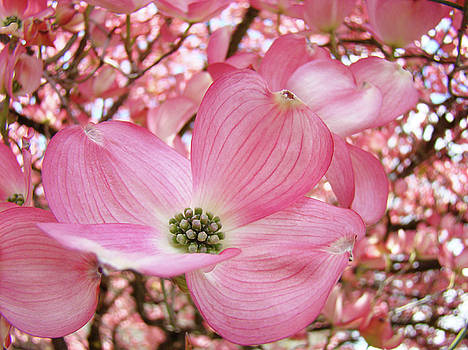 Baslee Troutman - Dogwood Tree 1 Pink Dogwood Flowers Artwork Art Prints Canvas Framed Cards