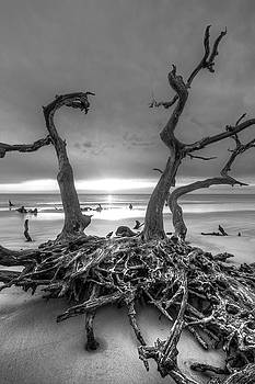 Debra and Dave Vanderlaan - Driftwood Black and White