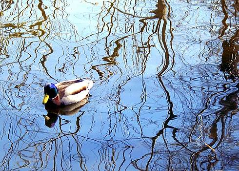 Irene Czys - Duck Pond Reflections