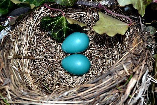 Michelle Calkins - Easter Eggs