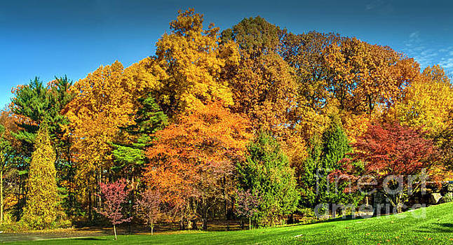 David Zanzinger - Fall Foliage Trees Beautiful