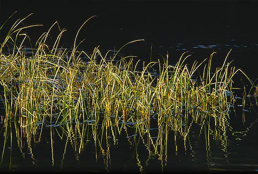 Sandra Bronstein - Fall Grasses - Snake River