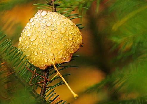 Adam Pender - Fall Raindrops