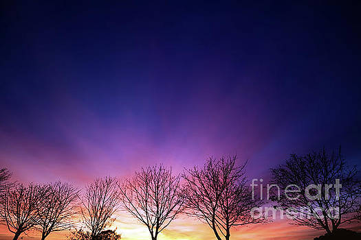 Simon Bratt Photography LRPS - Fiery winter sunset with line of bare trees