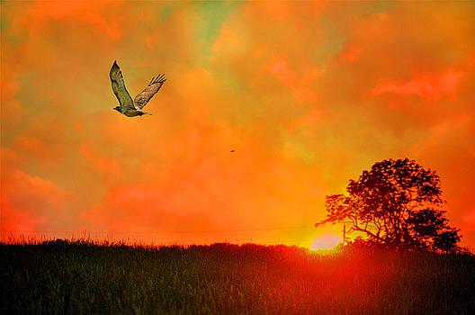 Emily Stauring - Flight at Sunset