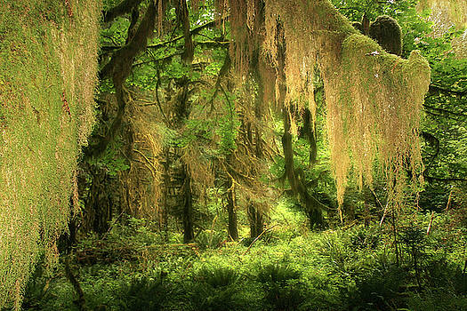 Christine Till - Forest Fantasy - Quinault - Gateway to Paradise on the Olympic Peninsula WA