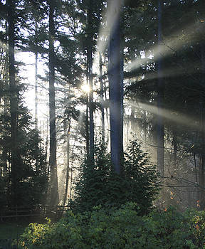 Crista Forest - Forest Sunrise