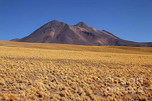 James Brunker - Golden Grasslands and Miniques Volcano Chile