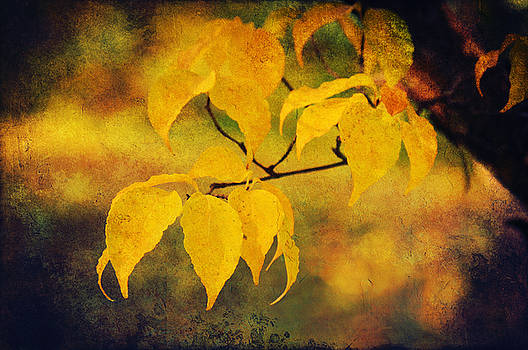 Angela Doelling AD DESIGN Photo and PhotoArt - Golden leaf