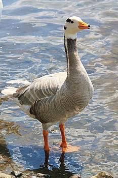 Martina Fagan - Goosey goosey gander...