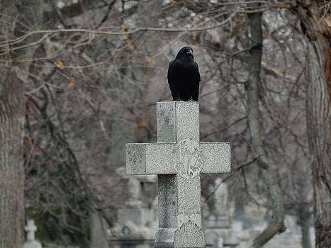 Gothicrow Images - Gothic Graveyard Crow On Cross