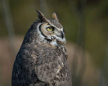 Rosemary Woods-Desert Rose Images - Great Horned Owl-IMG_3372-2017