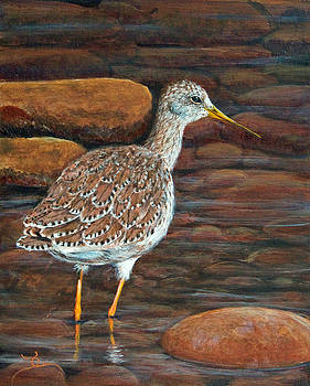 Dee Carpenter - Greater Yellowlegs