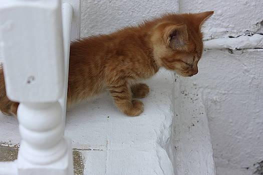 Yvonne Ayoub - Greek Street Kitty 01