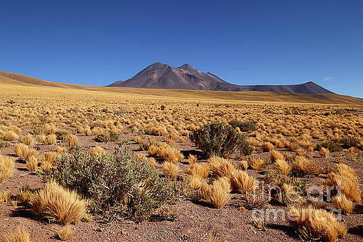 James Brunker - High Altitude Puna Grasslands and Miniques Volcano Chile