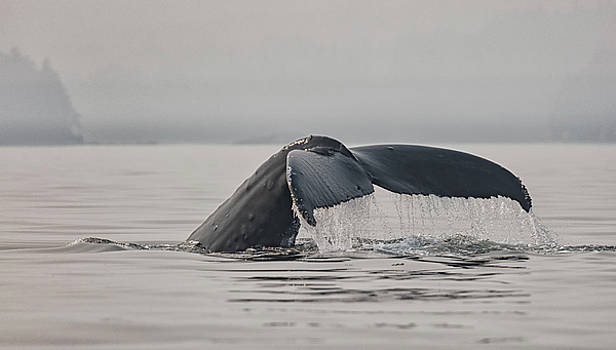 Randy Hall - Humpback In The Mist