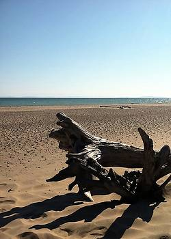 Michelle Calkins - Lake Superior Driftwood