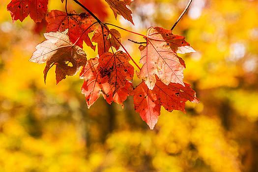 Karol Livote - Leaves Of Autumn