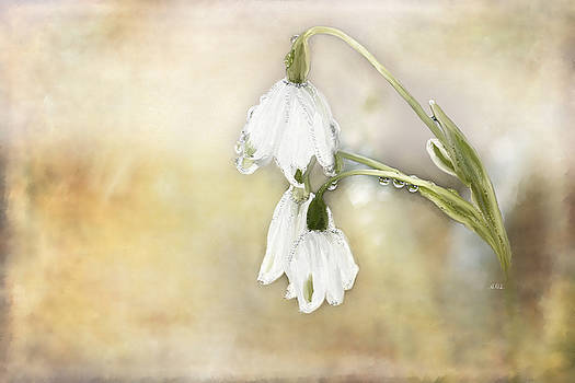 Angela A Stanton - Lily of the Valley