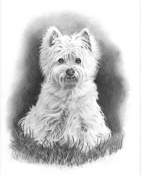 Joyce Geleynse - Little Westie in Pencil