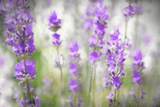 Andrea Kollo - Lost in Lavender