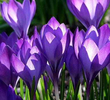 Byron Varvarigos - Luminous Floral Geometry