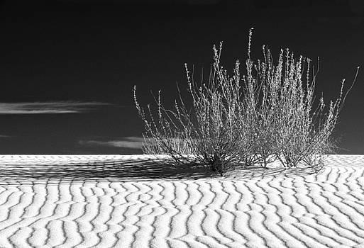 Sandra Bronstein - Morning at White Sands